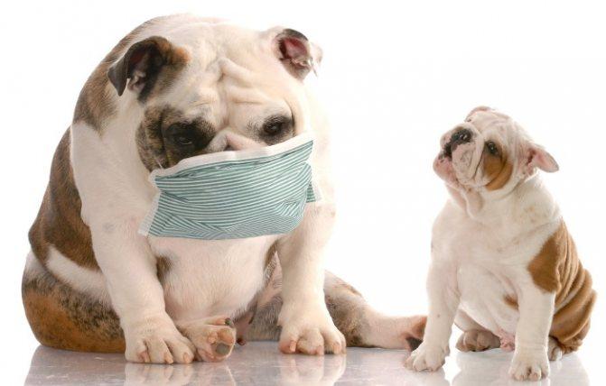 Вакцинация от бешенства запрещена