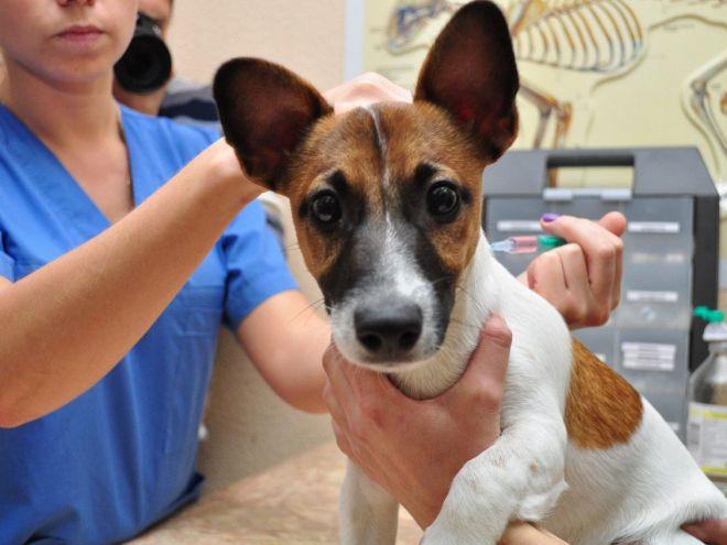 Вакцинация собак от чумы