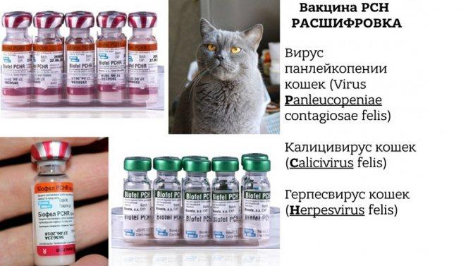 Вакцины от кошек и их стоимость
