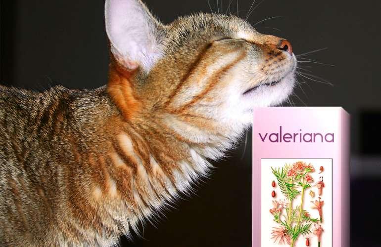 Валерьянка для кошек