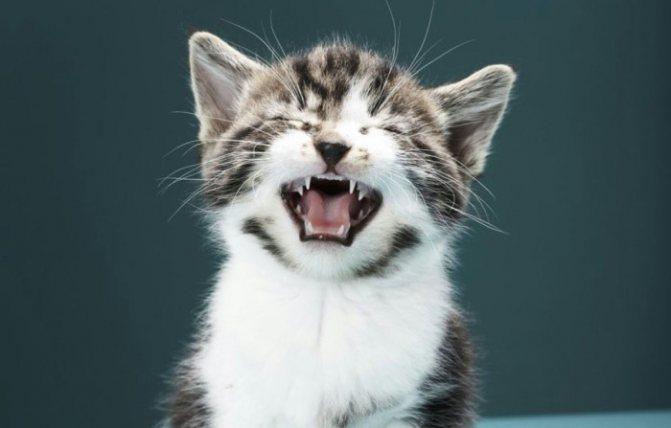 Ваша кошка чихает и слезятся глаза, что делать