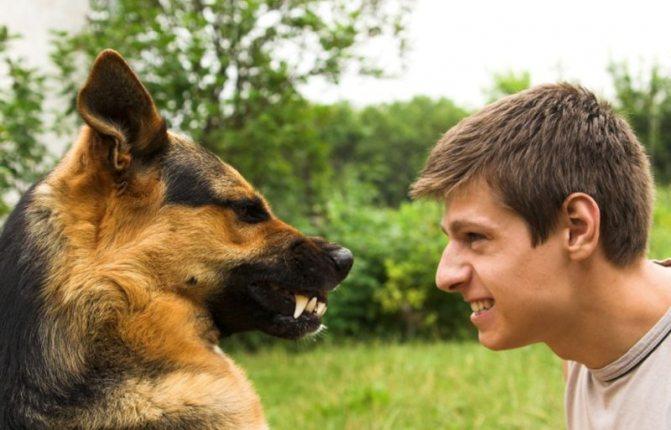 Ваша собака проявляет агрессию по отношению к вам? Возможно она испытывает страх перед вами