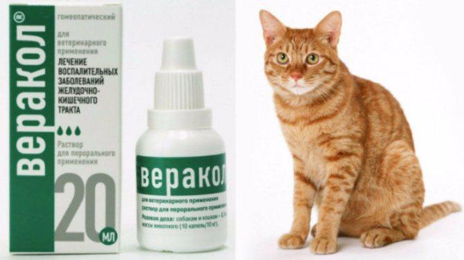 «Веракол»: как применять для кошек