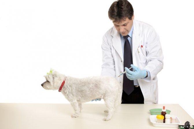 Ветеринар делает инъекцию собаке