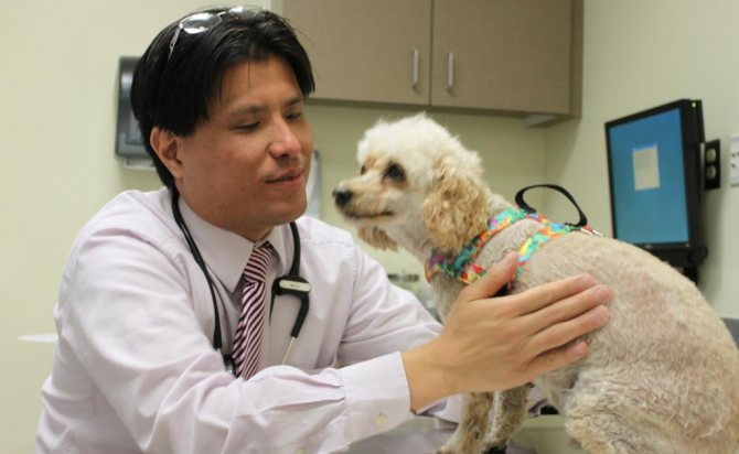 Ветеринарный осмотр собаки
