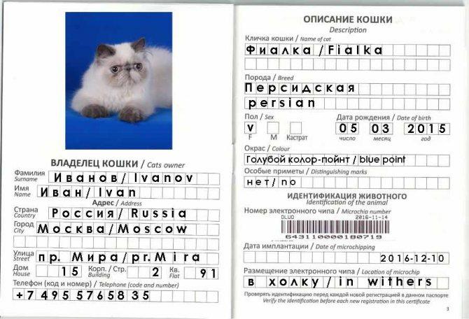 Ветеринарный паспорт международного образца для кошек