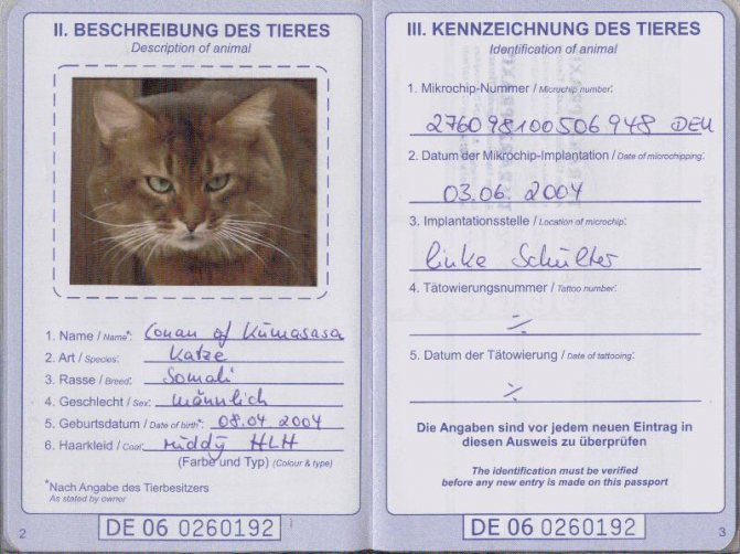 ветеринарный паспорт в документах на кошку