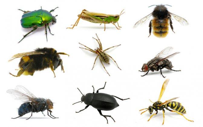 виды насекомых
