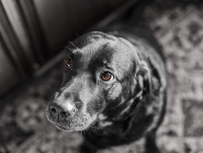 Виноватое лицо у собаки