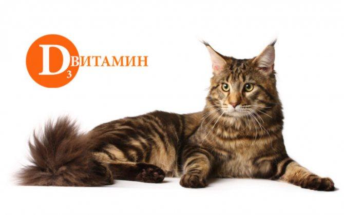 витамины для мейн кунов котят
