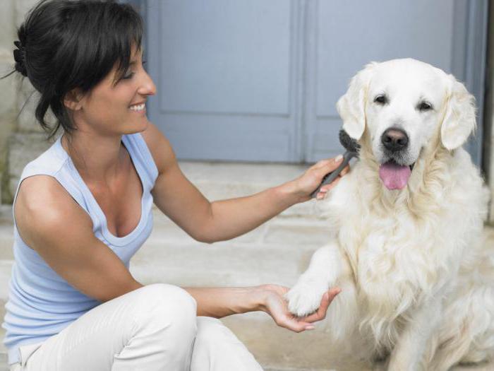 витамины для шерсти собак отзывы