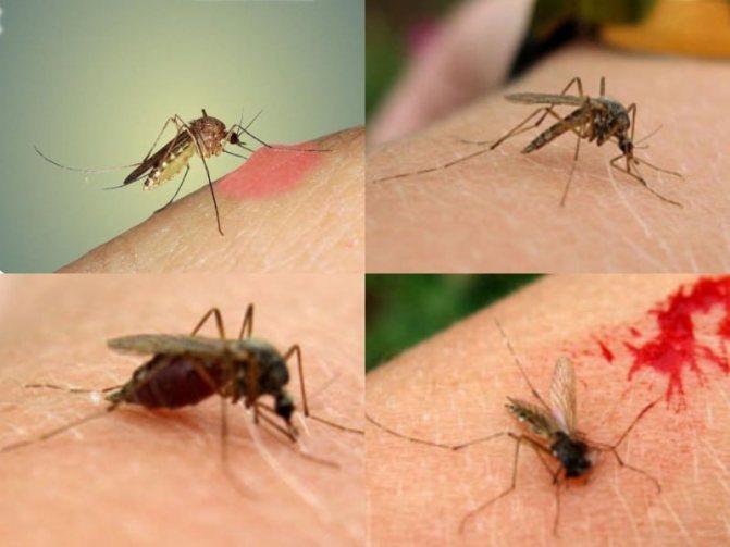 вкусовые предпочтения комаров