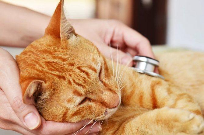 Внезапное нарушение координации у кошек. Причины нарушения координации у кошек