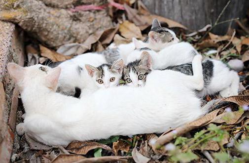 во сколько можно забирать котят от кошки