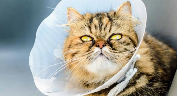 во сколько стерилизовать кошку