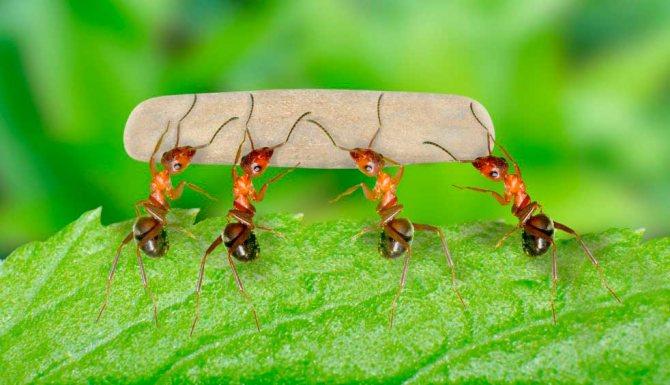 Во сне муравьи что-то несут - что это значит?