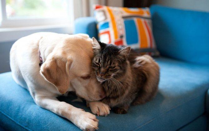 Во время обработки нельзя оставлять домашних животных в помещение