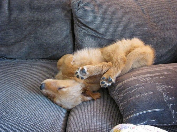 Во время сна в животном проявляются древние инстинкты