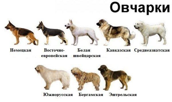 Восемь псов
