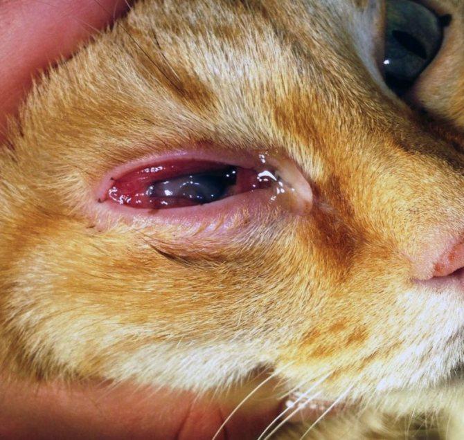 Воспаление глаза может вызывать целый комплекс изменений, фото https://kotikiinfo.ru