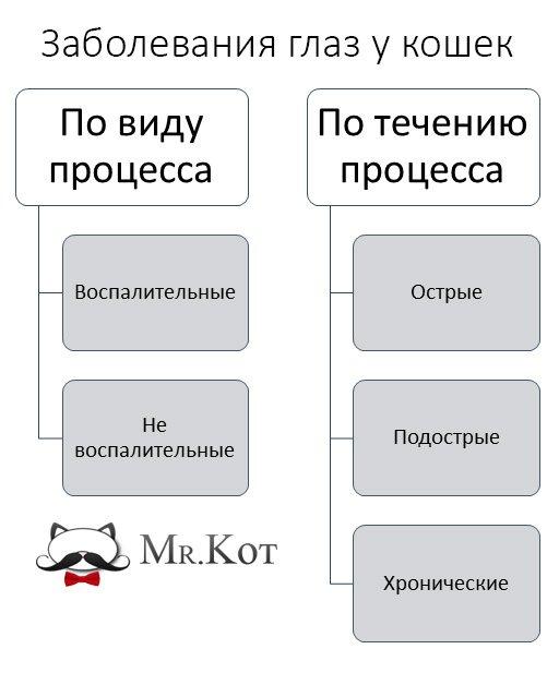 Воспаление глаза у кошки чем лечить, панофтальмит у кошек лечение Москва