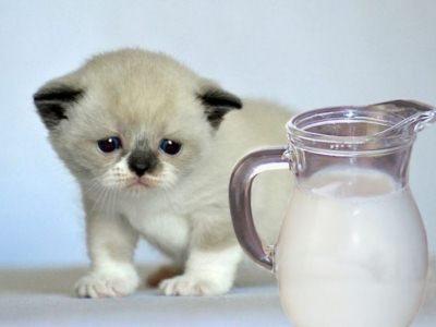воспаление носослёзного канала грозит котятам