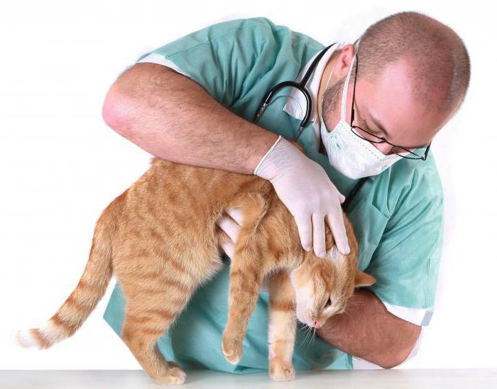 воспаление параанальных желез у собак и кошек
