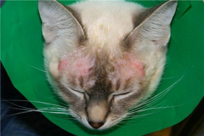 Воспалительные поражения кожных покровов
