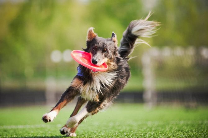 воспитание как способ отучить собаку кружиться вокруг себя
