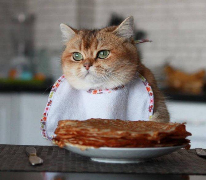 Вред сладкого для печени и почек у кошки