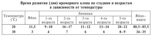 Время развития мраморного клопа по стадиям и возрастам в зависимости от температуры