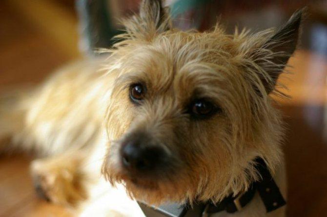 Всё о тримминге собак