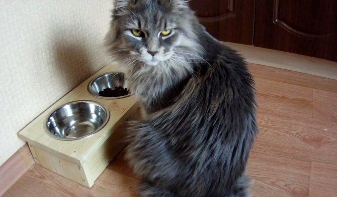 Все предметы, используемые кошками, важно периодически быть и обеззараживать