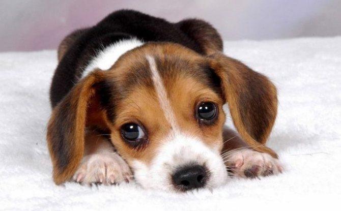 все собаки которые не линяют