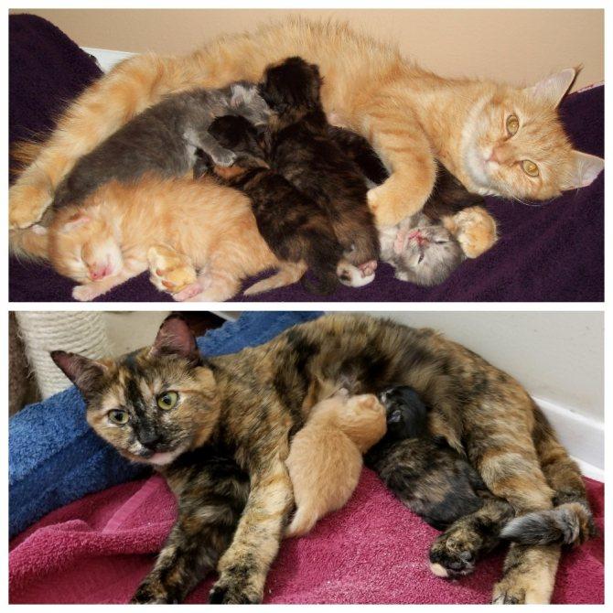 Всех ли котят родила кошка - как понять