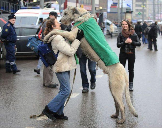 Встреча собаки с хозяйкой
