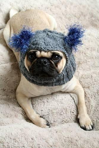 вязаные шапки для собак
