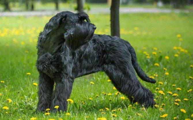 Выбираем собаку для содержания в квартире - ТОП-30 лучших пород