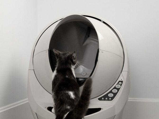 Выбор лотка для приучения кошки