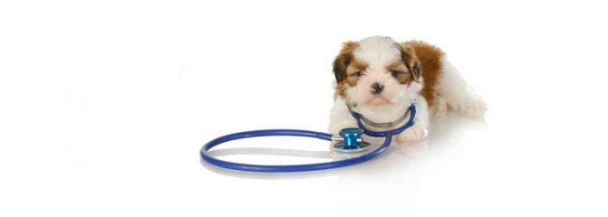 выбор здорового щенка