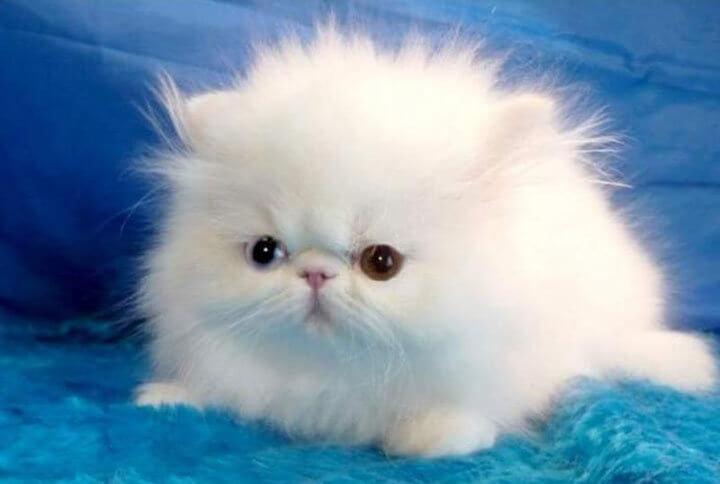 выбрать имя пушистому комочку котенку