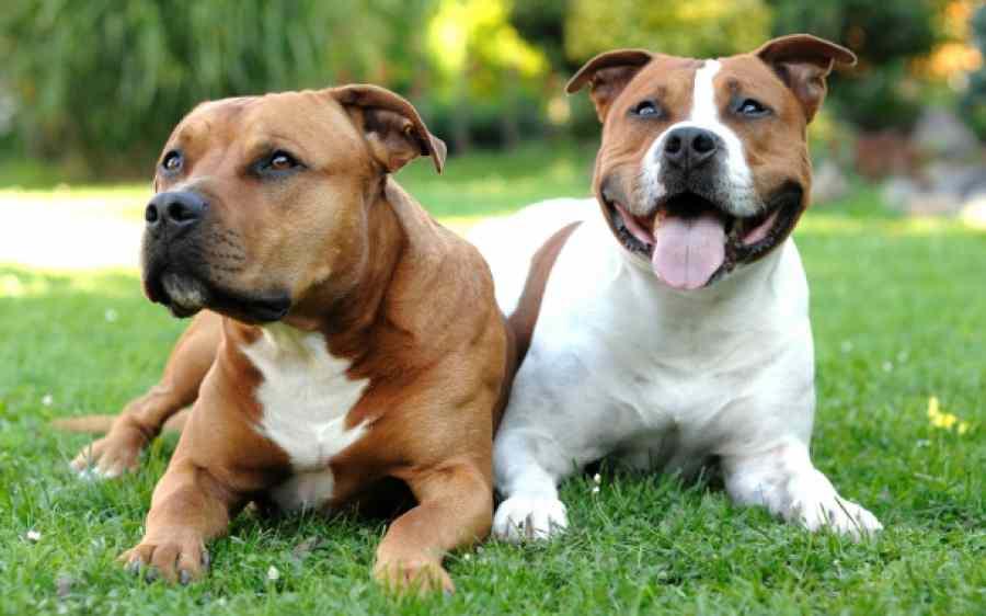 выделения у собаки после вязки