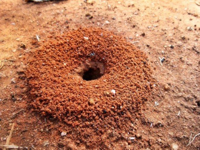 Выход из муравейника