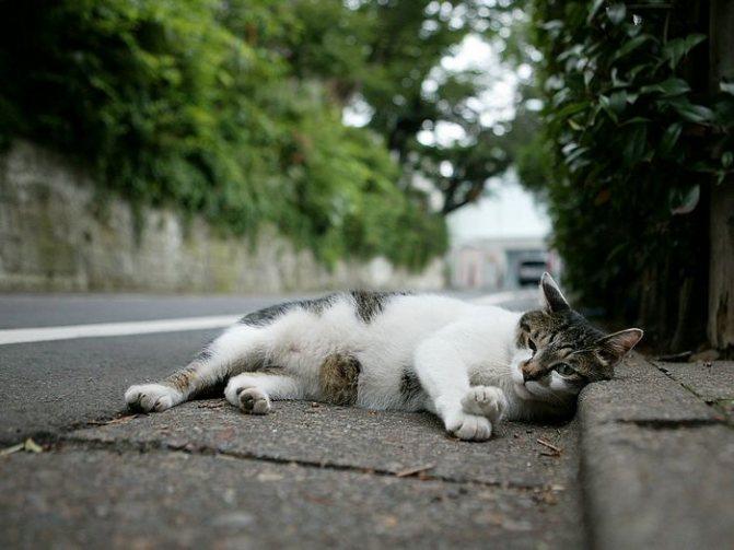 выход из наркоза кошки после стерилизации