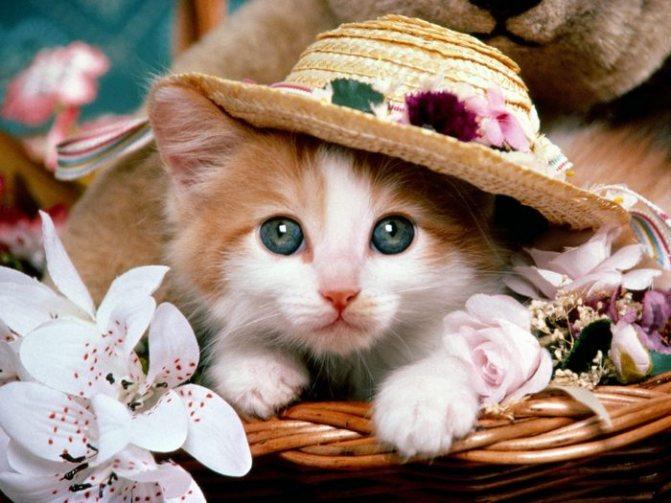 вывести блох у котенка домашними средствами