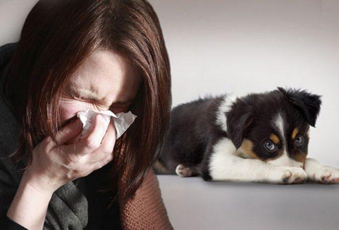 Взять собаку, если есть аллергия