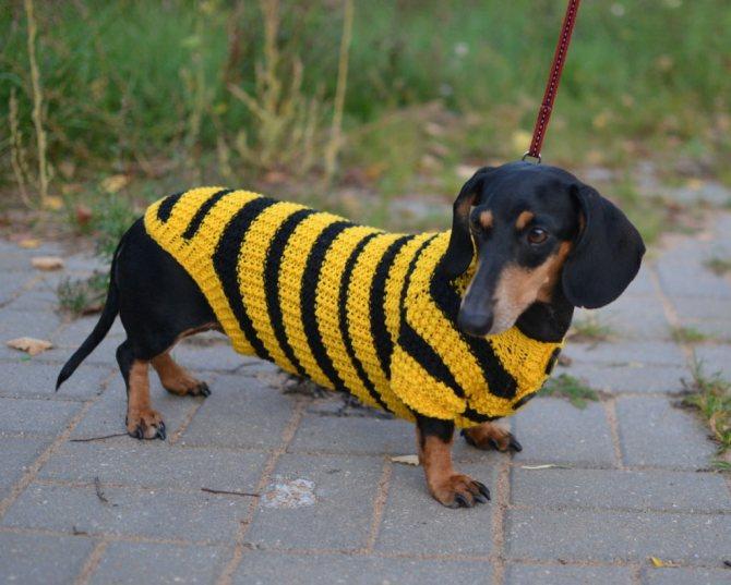 - Я пчёлка!..
