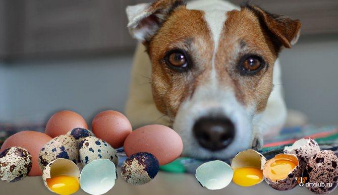 Яичная скорлупа для собак
