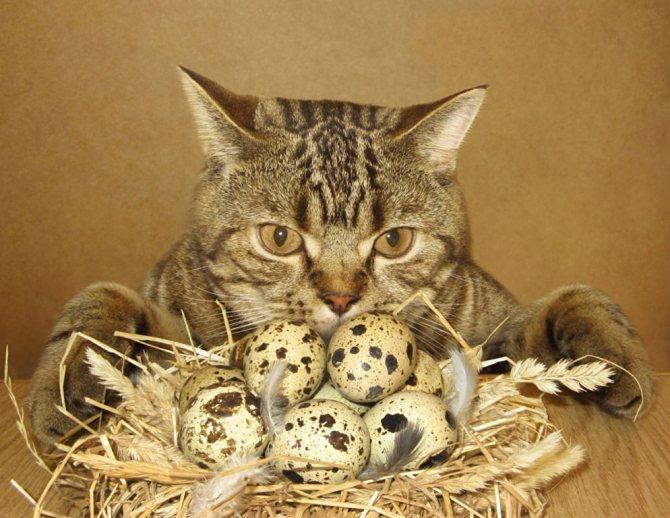 яйца и кот