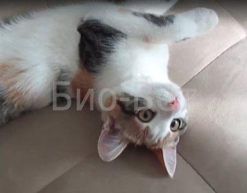 Язва на губе у кошек